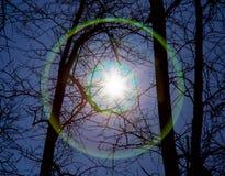 太阳或另一个星通过树发光 免版税库存图片
