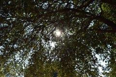 太阳投掷树 库存图片
