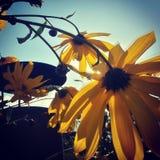 太阳收藏家 库存图片
