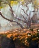 太阳放光周到树和绿色 库存图片