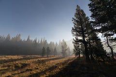 太阳放光穿过雾在山森林 免版税图库摄影