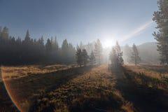 太阳放光穿过雾在山森林 库存图片