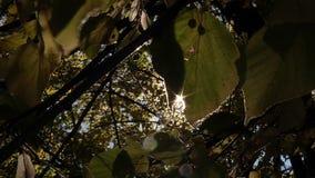 太阳断裂光芒通过叶子 影视素材