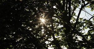 太阳断裂的光通过树的分支在夏天 股票视频