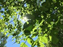太阳断裂通过叶子 免版税库存图片
