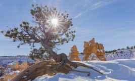 太阳星和树-,当远足在多雪的冬天-布莱斯峡谷国家公园时 免版税库存照片