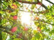 太阳是通过分支 免版税图库摄影