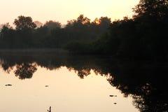太阳是TUOCHING树上面 免版税库存图片