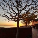 太阳晚上树 图库摄影