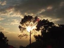 太阳树荫 库存图片