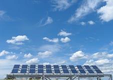 太阳植物 库存照片