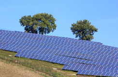 太阳植物 免版税库存照片
