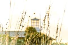 太阳洗涤了象草的沙丘 免版税库存图片