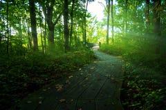 太阳浸泡了树梢走道 库存照片