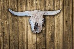 太阳漂白了在老木谷仓房屋板壁背景的母牛头骨 库存图片
