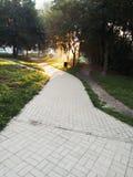 太阳火光在早晨 库存图片