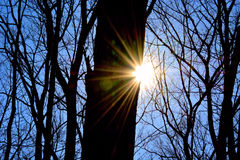 太阳火光在森林森林地 库存照片