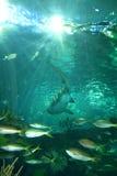 太阳火光海洋场面鱼蓝色摘要 库存照片