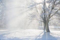 太阳火光通过一棵多雪的树 免版税库存照片