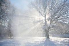太阳火光通过一棵多雪的树 免版税图库摄影