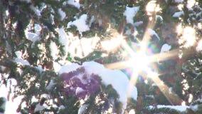 太阳火光通过多雪的树 影视素材