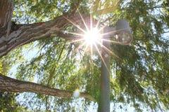 太阳火光通过树枝 库存图片