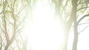 太阳火光 在的底视图在秋天树的黄色叶子在公园或森林明亮的太阳通过树枝发光 股票录像