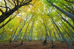 太阳照亮的山毛榉森林 免版税库存图片