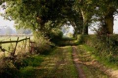 太阳照亮的树隧道  免版税图库摄影