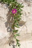 太阳珠宝, Stradbroke海岛Qld 免版税库存照片