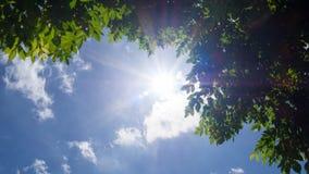 太阳的光芒与绿色叶子树的反对蓝天和白色云彩 免版税库存图片