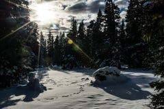 太阳的光芒在冬天森林里 免版税库存图片