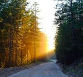 太阳的光芒在打破在路的一个轮的日落的和树枝 免版税库存图片