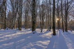 太阳的光芒在树分支落  日落在冬天山毛榉森林里 免版税库存图片