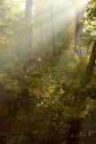 太阳的光芒在秋天公园 免版税库存图片