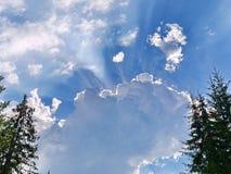 太阳的光芒由在蓝天的一朵明亮,大白色云彩构筑与高冷杉的峰顶 图库摄影