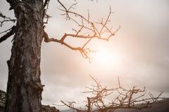 太阳的光芒通过树的分支 库存图片