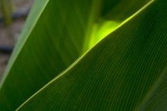 太阳的光芒通过植物的绿色叶子 免版税库存图片