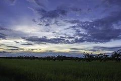 太阳的反射在晚上和在天空的云彩与在稻田的阴影树 库存图片