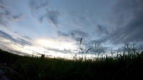 太阳的反射晚上和云彩快速地移动在与阴影树的天空在稻田 股票视频