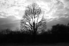 从太阳的橡树在春天下云彩2017年 免版税库存图片