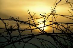 太阳的设置在蓝天的 库存图片