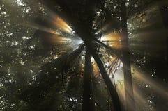 太阳的透明度 免版税库存图片