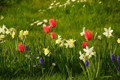 太阳突出花的精采颜色 法国 库存图片