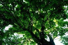 太阳绿色叶子 免版税库存图片