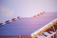 太阳能电池产生的电能在太阳光,蓝色光致电压的太阳电池板特写镜头,安全世界的绿色能量,力量之前 免版税图库摄影