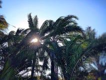 太阳自然 库存图片