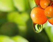 太阳被点燃的浆果,在雨以后的水下落。 免版税库存图片