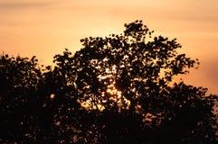 太阳设置在与橙色天空的一棵高大的树木的,剪影 库存照片