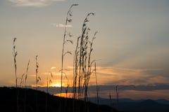 太阳设置的风景风景在云彩后的与在前景现出轮廓的草 免版税库存图片